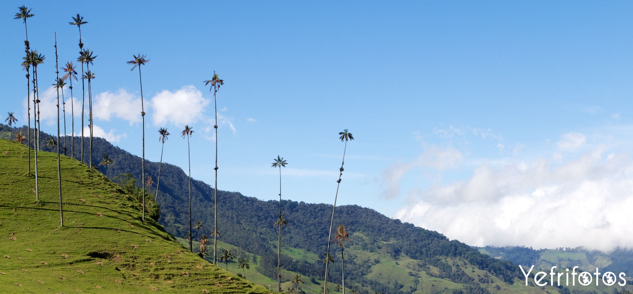 Colombie - Valle del Cocora Panorama